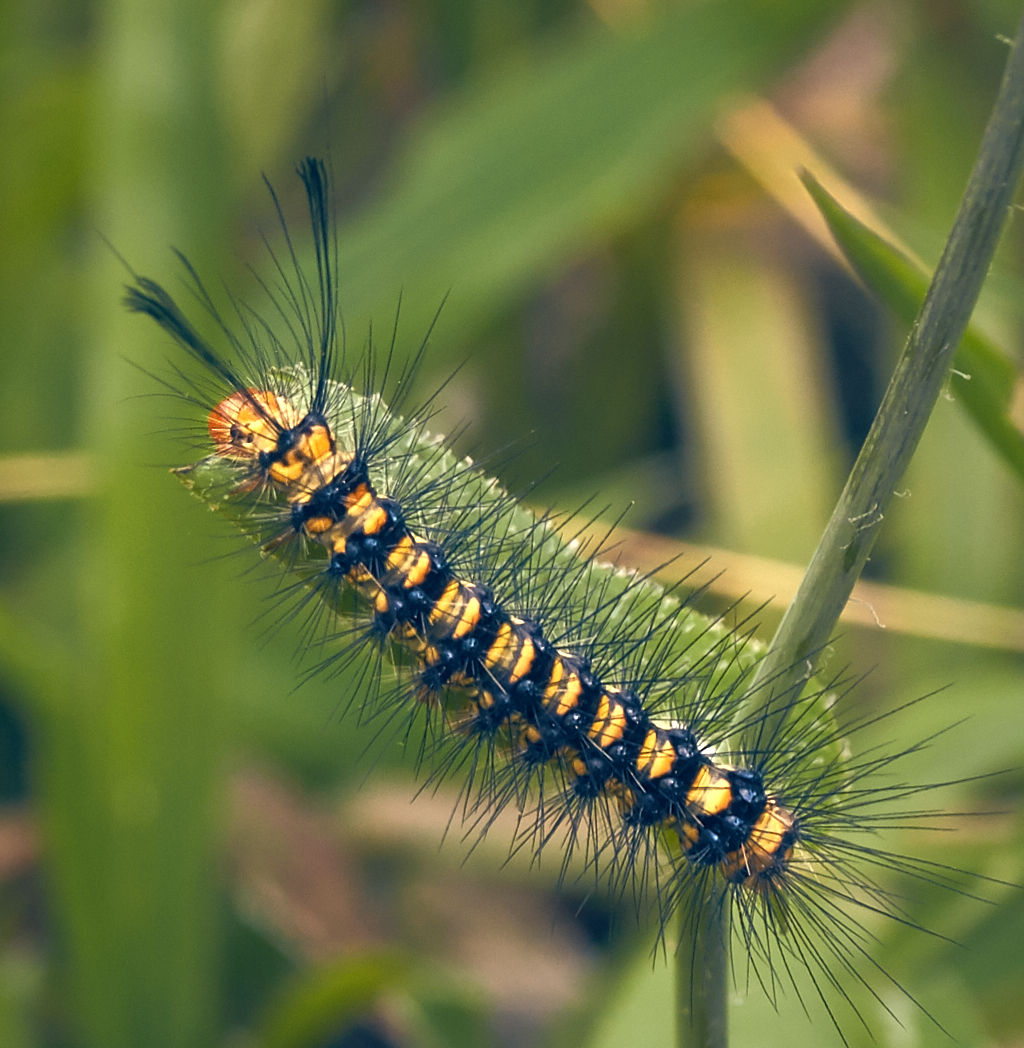 caterpillar,transform,garden,Philippines
