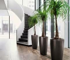 5 Piante Facili Da Coltivare Per Appartamenti Con Poca Luce