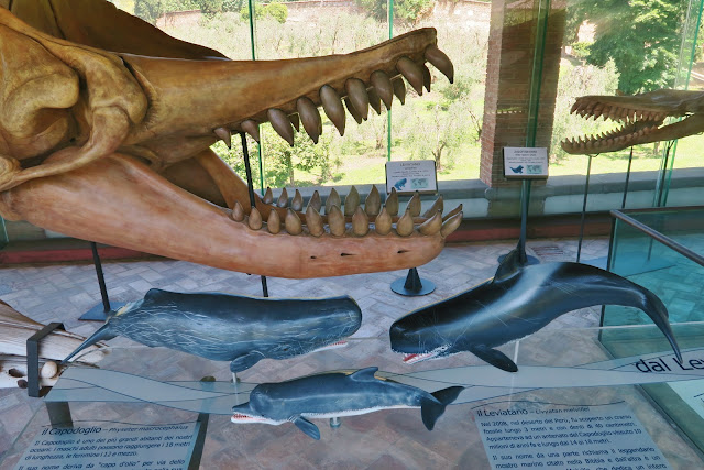 The Whale Gallery at the historic Pisa Natural History Museum