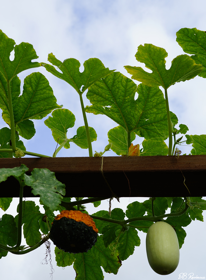 Grow vegetables in your garden
