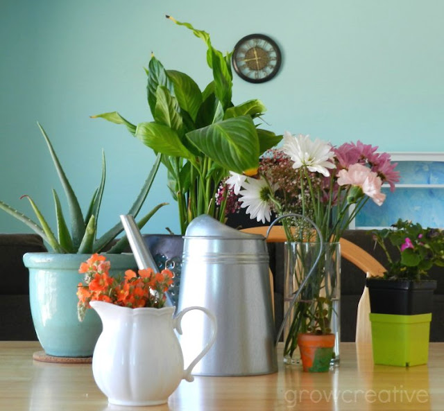 Houseplants, flowers and cactus: growcreativeblog