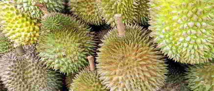 Cara Mengkonsumsi dan Memilih Buah Durian