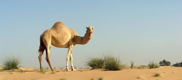 Animales, temperaturas extremas y biologia