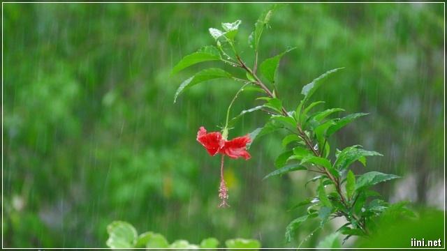 ảnh cảnh trời mưa