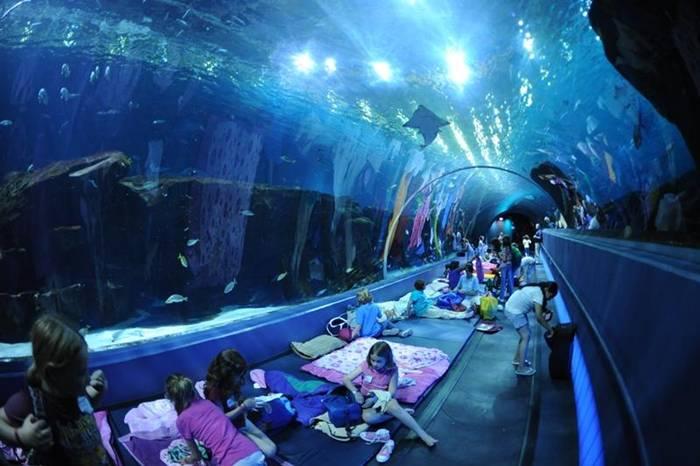 Pix Guru: Top 5 world's most famous aquariums