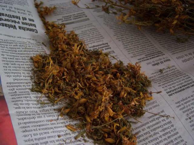 Hierba seca de Hipérico o hipericum perforatum listo para usar