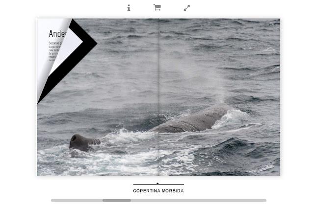 Isole Lofoten verso nord con Simon's passion 4 Travel capodoglio sperm whale