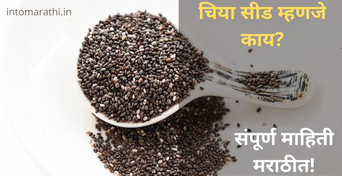 chia seeds in marathi | चिया सीड म्हणजे काय? संपूर्ण माहिती मराठीत.