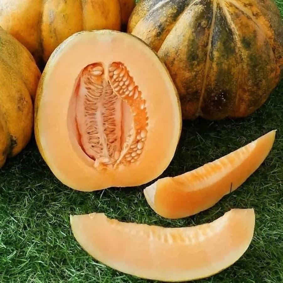 Benih Sayur Buah Blewah Manis Isi 40 Biji Padang