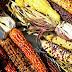 BIODIVERSITE : QUAND L'AGRICULTURE MENACE LA NATURE