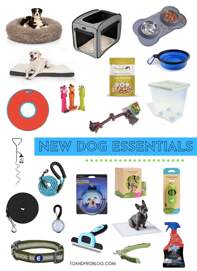 New Dog Essentials