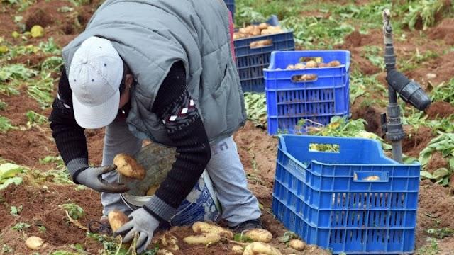 Παράταση στην πληρωμή της ειδικής ασφαλιστικής εισφοράς των αγροτών
