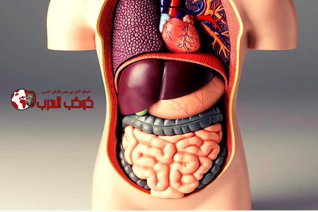 أفضل سحور لمرضي القولون في رمضان وأطعمة تعمل علي تريح القولون