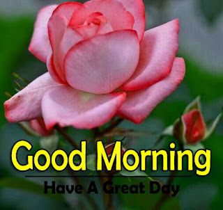 New Good Morning 4k Full HD Images Download For Daily%2B62
