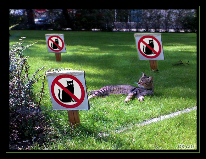"Photoshopped Cat picture • Sorry, no cats allowed on this lawn. ""WHAT?"" Fuck da Police! hahaha"