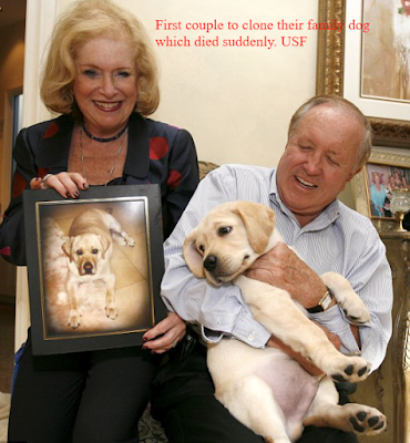 Edgar and Nina Otto spent $155,000 in getting their beloved deceased dog, named Sir Lancelot, cloned.