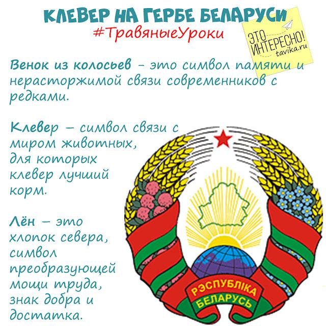 клевер на гербе Беларуси