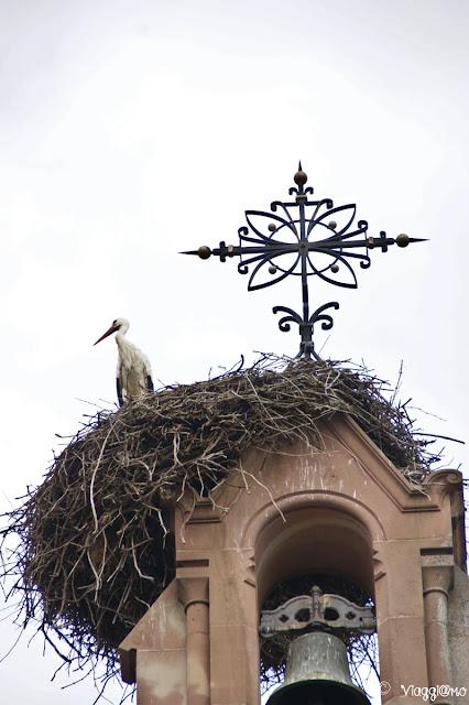 Una delle tante cicogne alsaziane sul campanile della chiesa