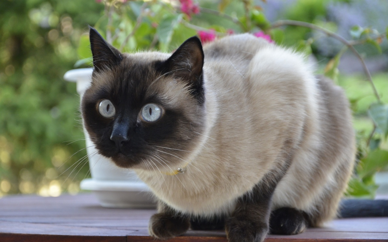 | Cats | Cats Photos | Beautiful White Cats | Black Cats ...