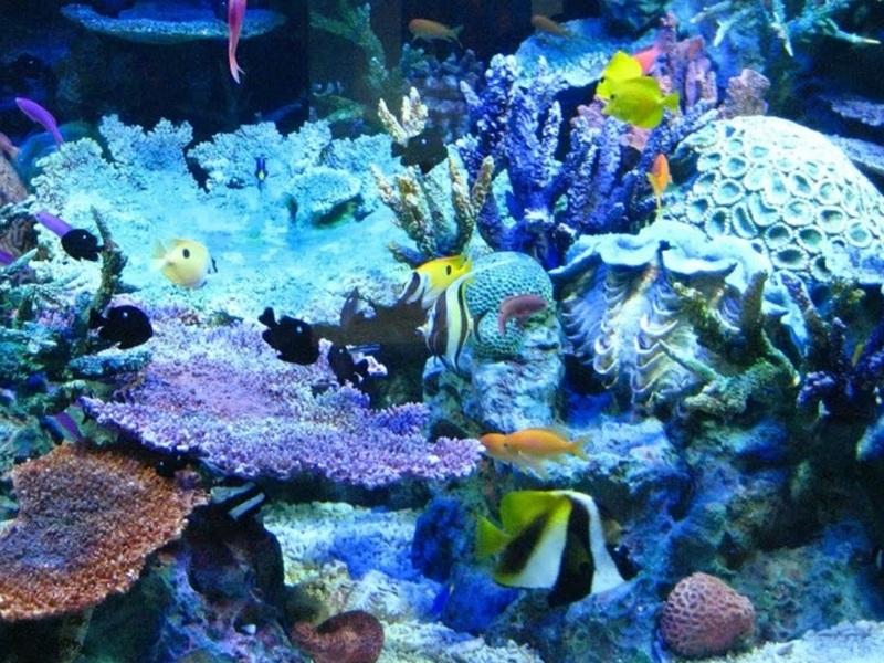 Ocean Biome Facts And Description