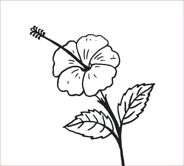 gambar-sketsa-bunga-sepatu