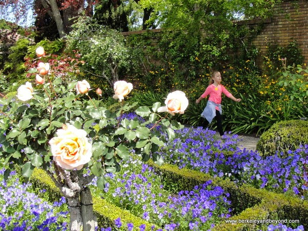 Chartres Cathedral Garden at Filoli in Woodside, California