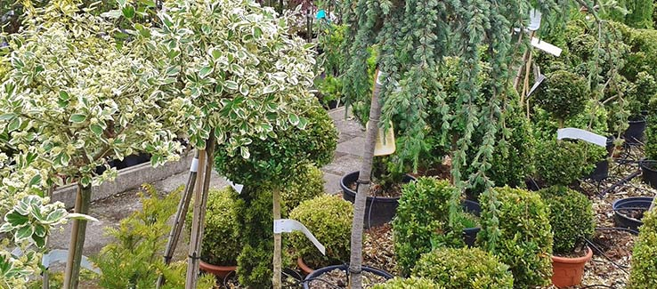 Healthy growing tree selection