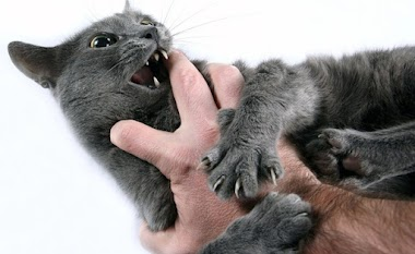 Why do cats sometimes attack after a few minutes of being pet and seeming to enjoy it?