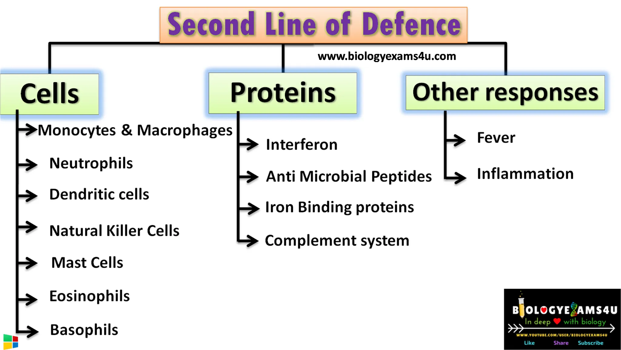 Second line of defense in immunology