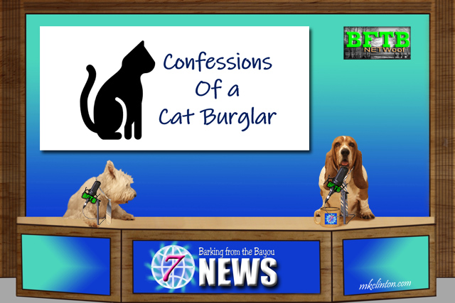 BFTB NETWoof News desk with two dogs