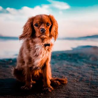 cute dog whatsapp dp images