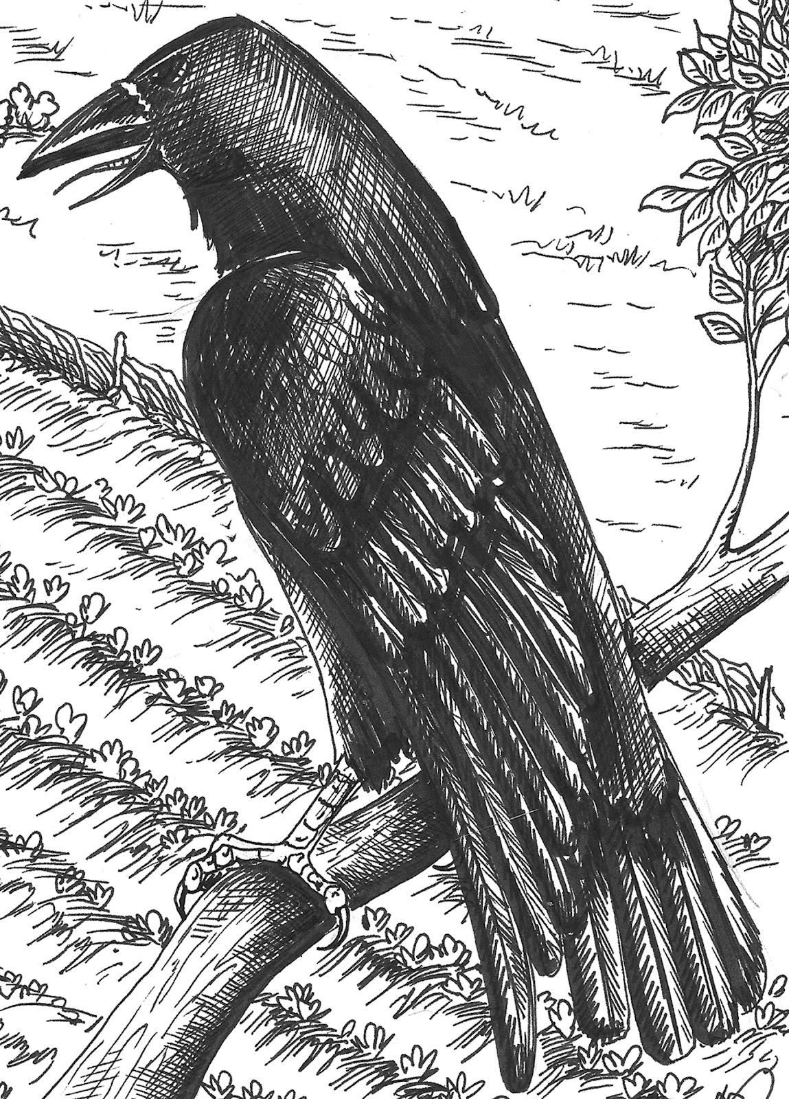 the black anglo saxons pdf