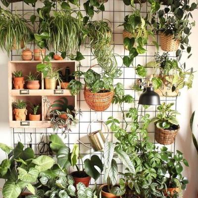 urban jungle mur de plantes vertes cloison végétale