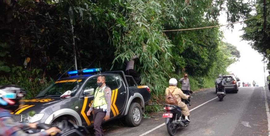 Polisi Polsek Bobotsari Pangkas Pohon Bambu Roboh Menutup Jalan