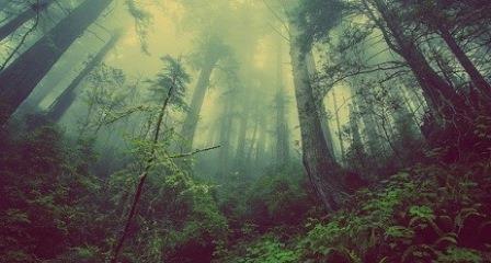 Jenis-jenis hutan berdasarkan fungsinya dijelaskan menurut Undang-Undang Kehutanan Nomor 41 tahun 1999 terbagi menjadi 3 bagian yakni hutan konservasi, hutan lindung, dan hutan produksi. Dalam artikel ini akan diuraikan satu persatu tentang jenis hutan berdasarkan fungsinya serta luas kawasan yang telah ditentukan oleh pemerintah.