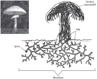 Struktur Kingdom Fungi/Jamur