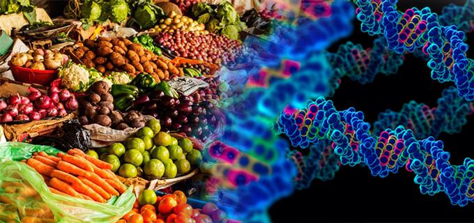 Por qu los cultivos transg nicos son una amenaza a los for Que son cultivos asociados
