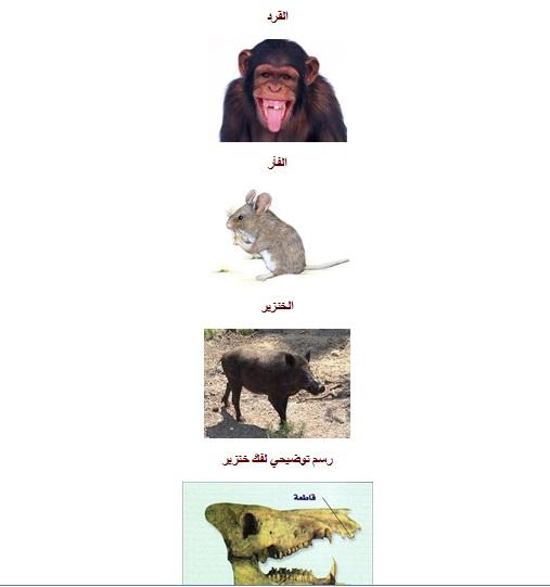 الحيوانات الكالشة