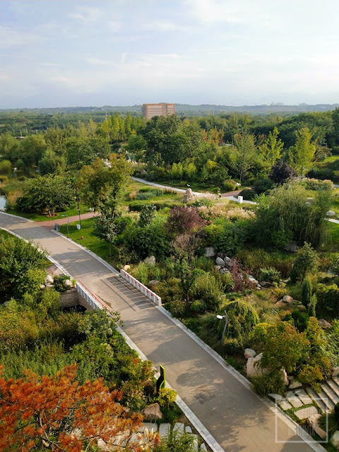 Ogrody botaniczne na świecie - ogórd botaniczny w Xi'an, prowincja Shaangxi, Chiny. Zwiedzanie, ciekawe i fascynujące rośliny azjatyckie, ciekawostki botaniczne i dendrologiczne, rośliny jadalne i użytkowe Chin i Azji, zwiedzanie ogrodu. Klony azjatyckie.