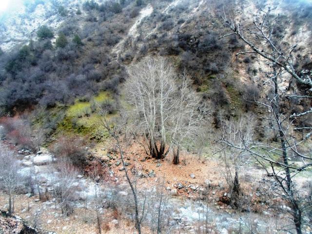 В ущелье Оджук, на крещение - Варзоб, Горы Таджикистана - фото из похода