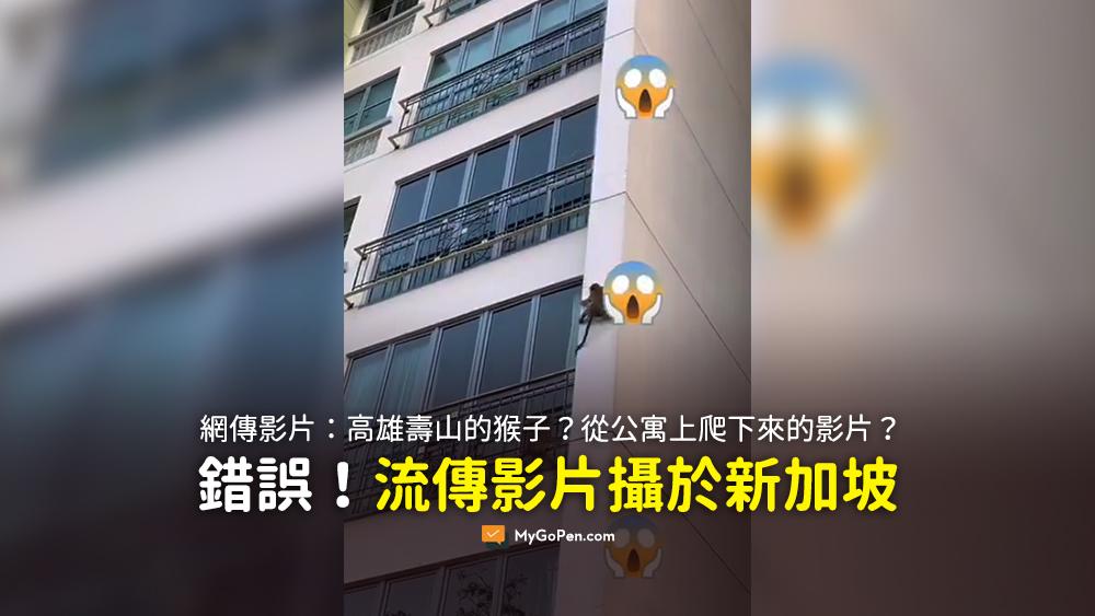 高雄壽山的猴子 影片 謠言