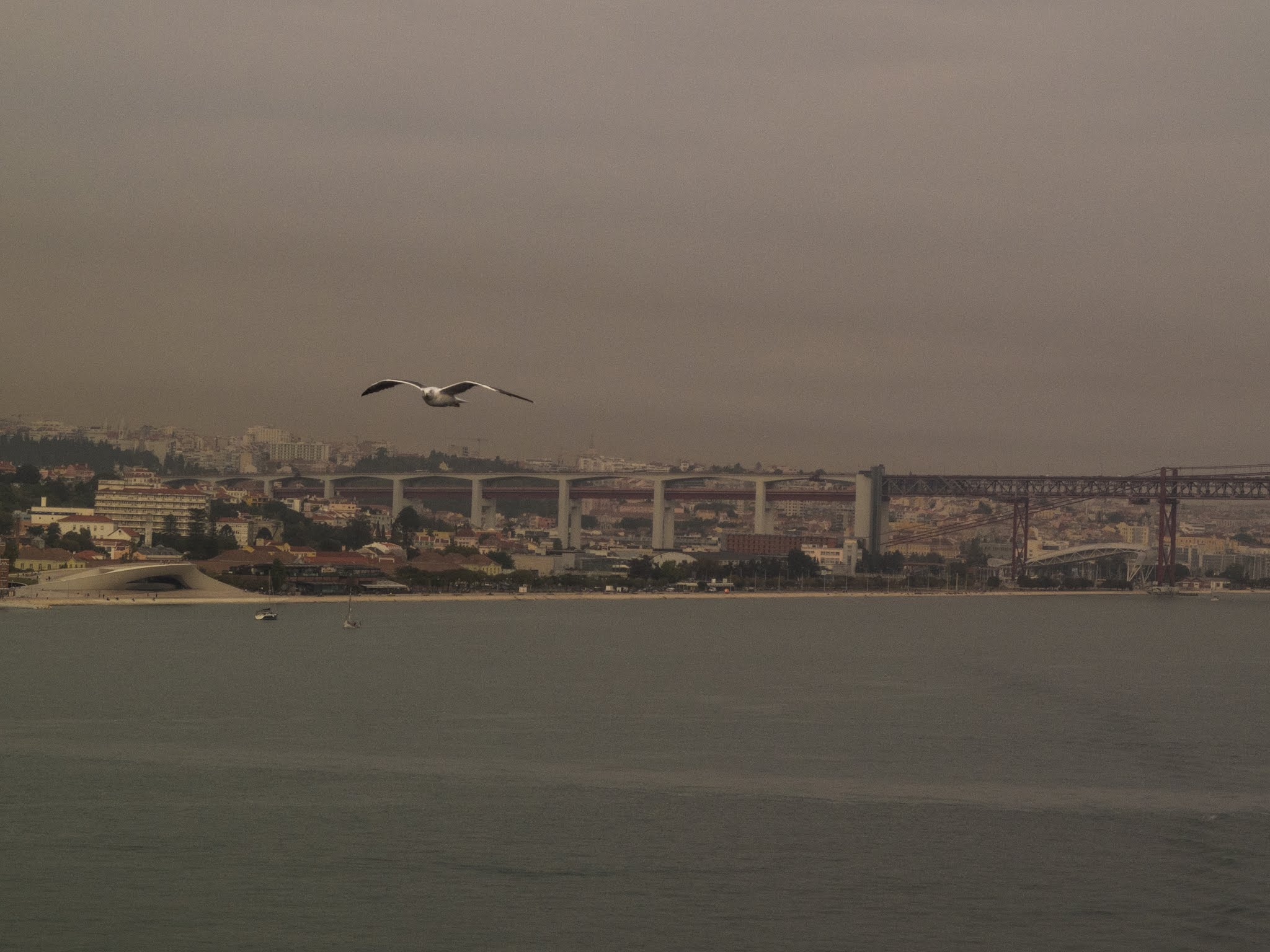 Seagull flying over the Tagus river in Lisbon, Portugal.