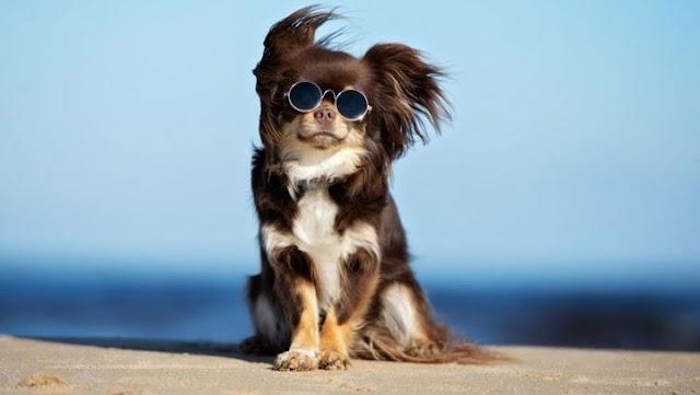 Ποιες εξετάσεις πρέπει να κάνει ο σκύλος μας μετά το καλοκαίρι;