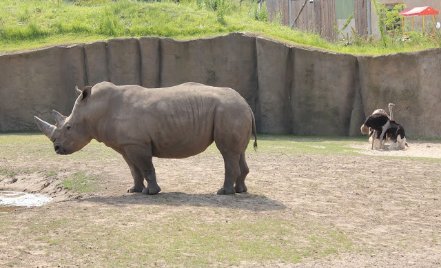 IMG 3930 - Wildlands Adventure Zoo Emmen