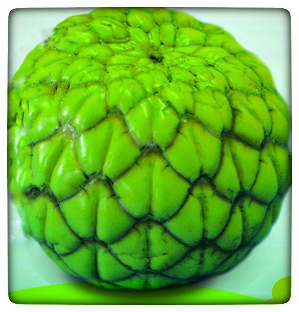 The size is the size of an adult's fist. The sago fruit is arranged in bunches, almost like barking, large scaly, and green skin.