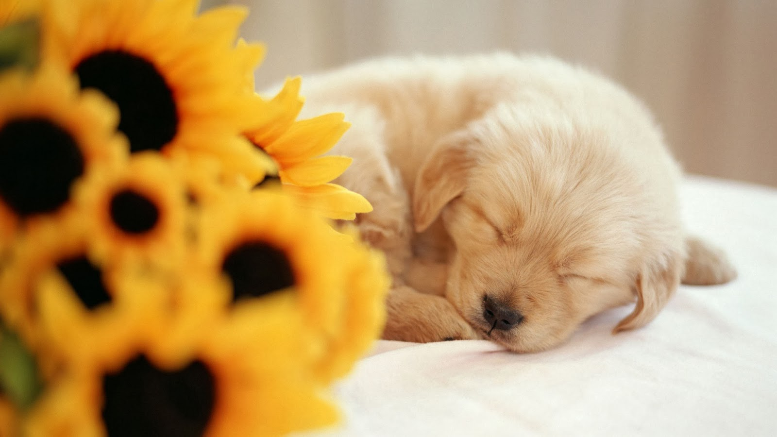Dogs - HD Wallpapers