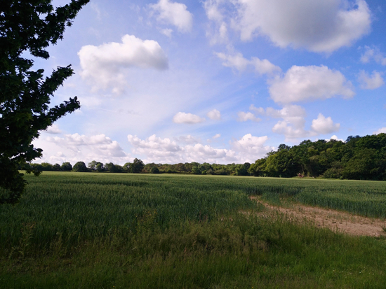 BrP5 - between Bradmore Lane and Potterells proposed for 290 homes  Image by North Mymms News released under Creative Commons