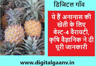 अनानास की खेती के लिए सबसे बढ़िया किस्में, ananas ki kheti best pineapple varieties उत्पादन ज़्यादा और लागत कम।