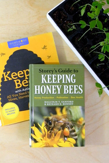 honey, bee-keeping, seed starting, bee pattern