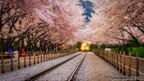 Gyeonghwa Station, Jinhae South Korea
